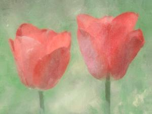 Tulips In The Mist by Hal Halli