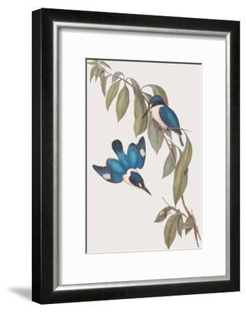 Halcyon Macleayi-John Gould-Framed Giclee Print
