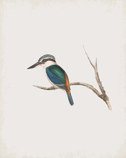 Halcyon Pyrrhopygia-John Gould-Giclee Print
