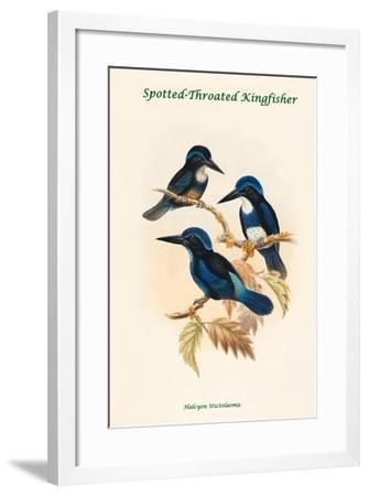 Halcyon Stictolaema - Spotted-Throated Kingfisher-John Gould-Framed Art Print