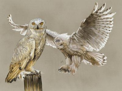 Halcyon-Barbara Keith-Giclee Print
