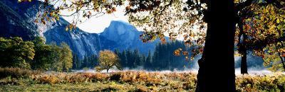 Half Dome, Yosemite National Park, California, USA--Photographic Print