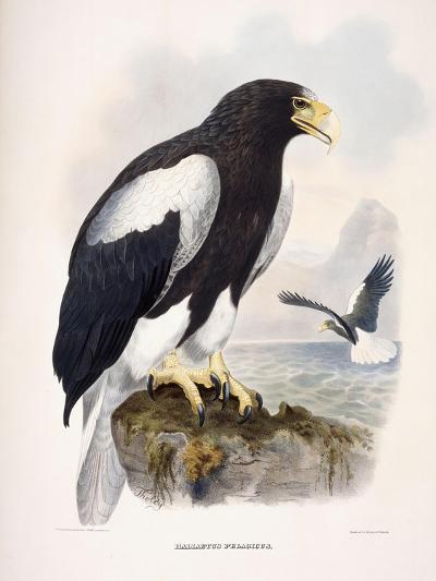 Haliaetus Pelagicus-Daniel Girard Elliot-Giclee Print