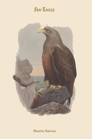 https://imgc.artprintimages.com/img/print/haliates-albicilla-sea-eagle_u-l-pqpf5w0.jpg?p=0