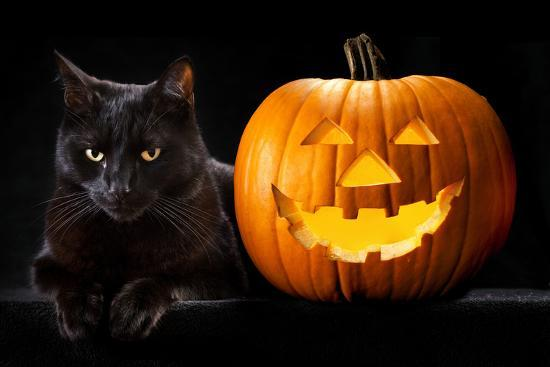 Halloween Pumpkin and Black Cat Scary Spooky and Creepy Horror Holiday Superstition Evil Animal And-kikkerdirk-Photographic Print