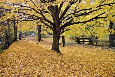 Halloween Scenic, New Jersey-George Oze-Framed Photographic Print