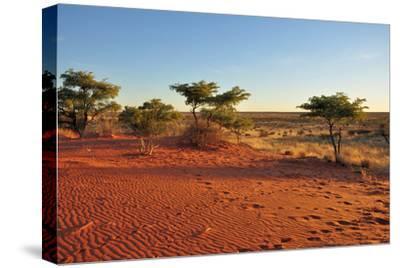 Red Sands and Bush at Sunset, Kalahari