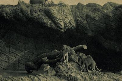Hamburg Eimsbüttel Stellingen, Hagenbecks Tierpark, Offene Löwenschlucht--Giclee Print