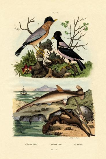 Hammerhead Shark, 1833-39--Giclee Print