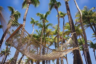 Hammock in a Palm Grove, Puerto Rico-George Oze-Photographic Print