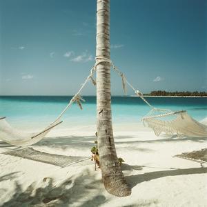 Hammocks Tied to a Palm Tree