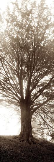 Hampton Gates Tree No.1-Alan Blaustein-Photographic Print