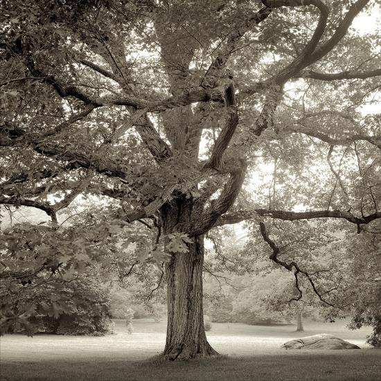 Hampton Maple I-Alan Blaustein-Photographic Print