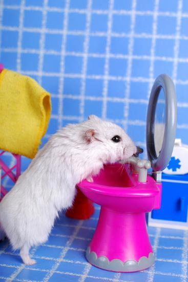 Hamster In The Bathroom- teresaterra-Photographic Print