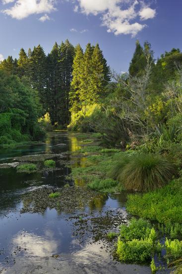 Hamurana Springs, Rotorua, Bay of Plenty, North Island, New Zealand-Rainer Mirau-Photographic Print