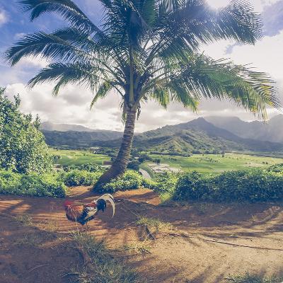 Hanalei Chicken Landscape, Kauai Hawaii-Vincent James-Photographic Print