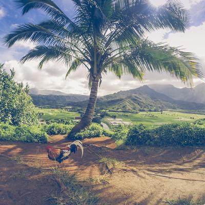 https://imgc.artprintimages.com/img/print/hanalei-chicken-landscape-kauai-hawaii_u-l-pt65v30.jpg?p=0