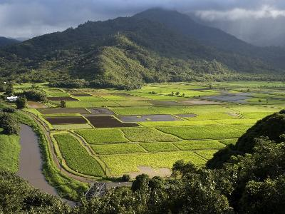 Hanalei Valley with Taro Fields Below, Kauai, Hawaii-John Elk III-Photographic Print