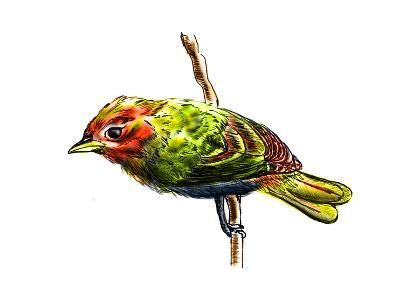 Hand Draw Bird-jim80-Art Print