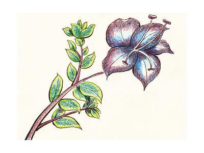 Hand Draw Flower-jim80-Art Print