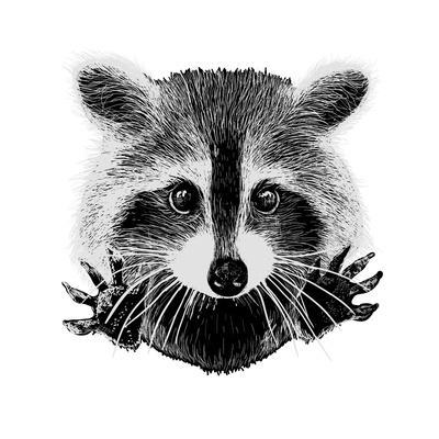 https://imgc.artprintimages.com/img/print/hand-drawn-raccoon_u-l-q11d4ph0.jpg?p=0