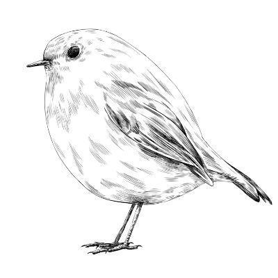 Hand-Drawn Robin-aggressor-Art Print