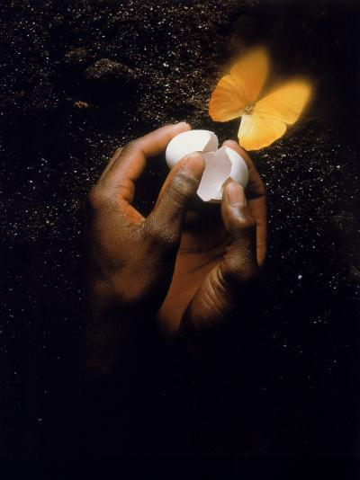 Hand with Egg Shell and Butterfly-Howard Sokol-Photographic Print