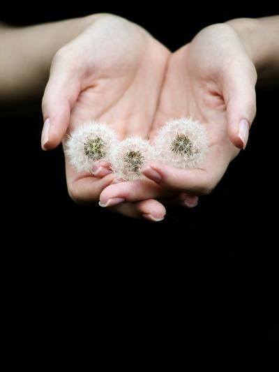 Handful of Dandelions-Elisa Lazo De Valdez-Photographic Print