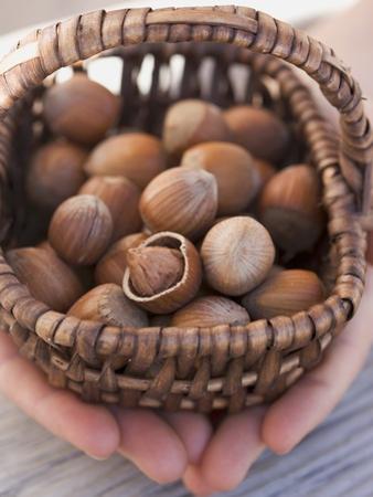 Hands Holding Basket of Hazelnuts