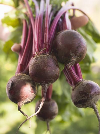 Hands Holding Fresh Beetroot--Photographic Print