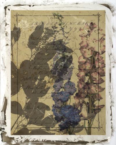 Handwritten Wildflowers I-Jennifer Goldberger-Giclee Print