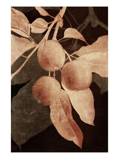 Hanging Apples I-Thea Schrack-Premium Photographic Print