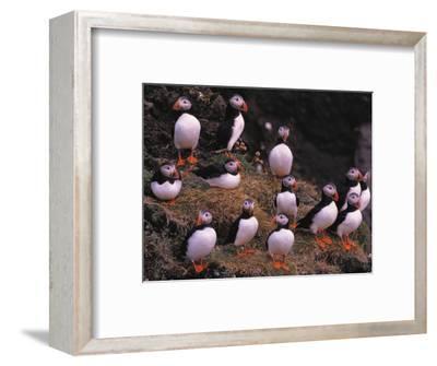 Hanging Around-Art Wolfe-Framed Photographic Print