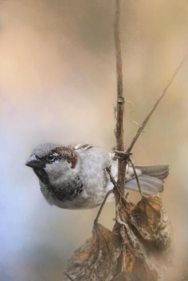 Hanging on Sparrow-Jai Johnson-Giclee Print