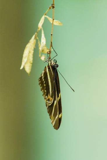 Hanging Out-Chris Moyer-Photographic Print