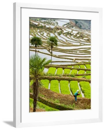 Hani Woman in Flooded Jiayin Terraces, Honghe County, Yunnan Province, China-Charles Crust-Framed Photographic Print