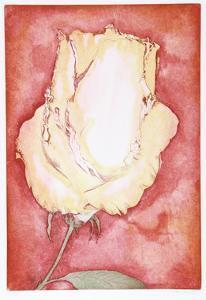 Yellow Rose by Hank Laventhol