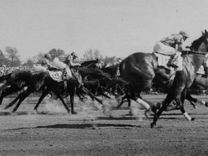 Needles in Kentucky Derby, Winner of the 82nd Running of the Most Famous of US Horse Races by Hank Walker