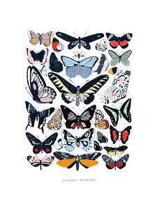 Butterflies by Hanna Melin