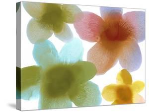 Floral Friends I by Hannah Carlson