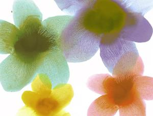 Floral Friends II by Hannah Carlson