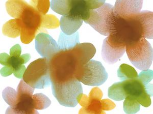 Floral Friends IV by Hannah Carlson