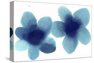 Floral Pair by Hannah Carlson