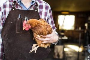 A Blacksmith Wearing A Leather Work Apron Holds A Chicken In Front Of His Workshop by Hannah Dewey