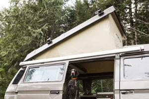 A German Shorthaired Pointer Dog Sits In A Volkswagen Bus On The Olympic Peninsula In Washington by Hannah Dewey
