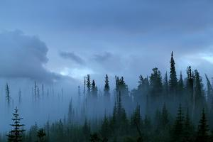 A Pacific Northwest Forest Just After A Storm In Fog by Hannah Dewey