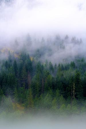 Foggy Morning In The Forest Of North Cascades National Park