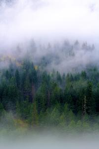 Foggy Morning In The Forest Of North Cascades National Park by Hannah Dewey