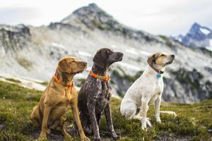 Three Dogs Sit On Top Of A Mountain In North Cascades National Park, Wa by Hannah Dewey