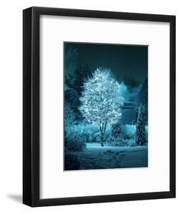 Illuminated Tree in Winter Garden by Hannuviitanen